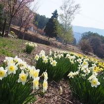 【お花見】 春のよませ