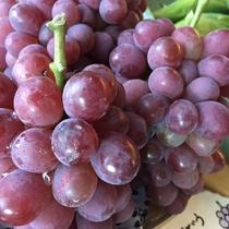 【よませ温泉朝市】夜間瀬の採れたてお野菜&果物を販売しております。種類豊富な葡萄(9月)