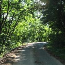 【アクティビティ】トレッキング&ハイキング☆よませの緑いっぱいの林道を歩いて森林浴♪
