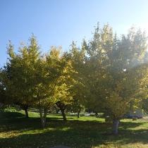 【ウォーキング】 紅葉と収穫期の夜間瀬のこみちをゆくりと散歩(秋)