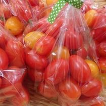 【よませ温泉朝市】にて夜間瀬産直採れたて新鮮お野菜を販売しております。フルーツトマト(8月)