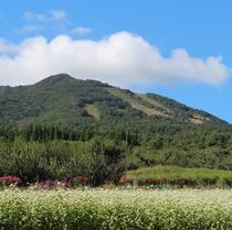 【山】高社山(こうしゃさん)と真っ白なそばの花