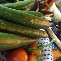 【よませ温泉朝市】にて夜間瀬の採れたて新鮮お野菜を販売しております。採れたて夏野菜きゅうり(8月)