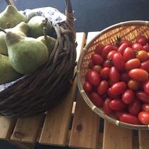 【よませ温泉朝市】にて夜間瀬の採れたて新鮮お野菜&果物を販売しております。(夏~秋)