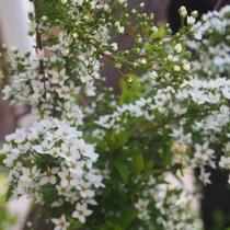 【花】 セランフラワーガーデン 春