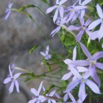 【花】 セランフラワーガーデン 初夏