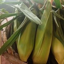 【よませ温泉朝市】にて採れたて新鮮お野菜を販売しております。甘味たっぷりトウモロコシ(8月)