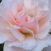 【花】 セランフラワーガーデン 夏