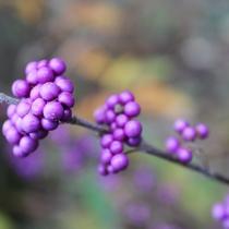 【花】 セランフラワーガーデン 秋