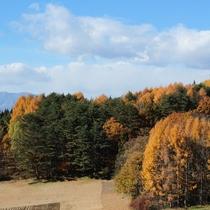 紅葉シーズンのよませは色とりどり♪ 絵画やお写真などステイしてごゆっくりいかがでしょうか