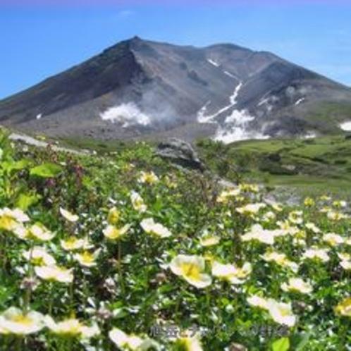旭岳とお花畑