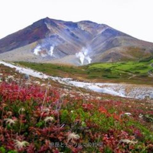 チングルマの紅葉と旭岳