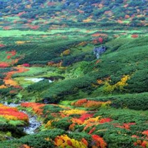 紅葉の旭岳2