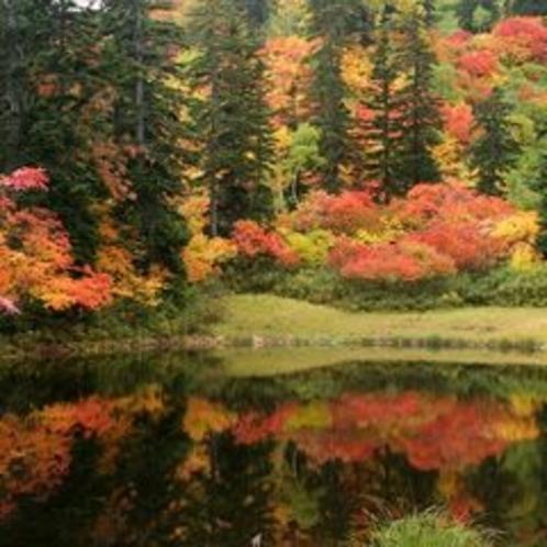 紅葉の旭岳4