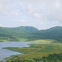 雄国沼 一面の黄色のじゅうたんニッコウキスゲ