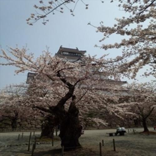 ◆春の鶴ヶ城◆
