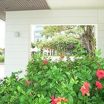 *【中庭】季節の植物を見つけるのも楽しいですよ。