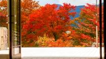 紅葉の見ごろは11月上旬~中旬です