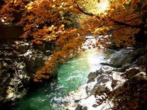 老神渓谷の紅葉