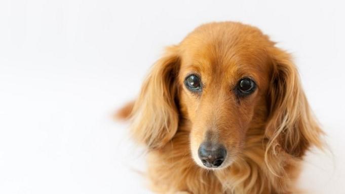 愛犬と一緒∪・ω・∪【直前割】愛犬0円&1名様2200円引き<★スタンダード会席×お部屋食>