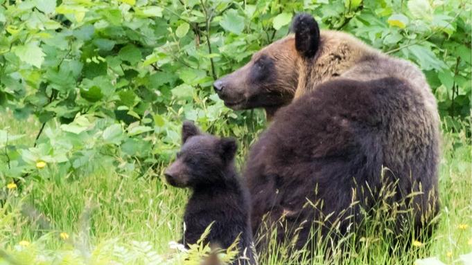 【熊牧場チケット付き】北海道旅行の定番!大迫力のヒグマを楽しむ<★スタンダード会席/会場食>