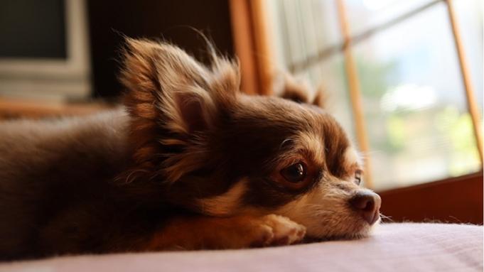 【秋冬旅セール】愛犬と一緒∪・ω・∪!お得に愛犬とお部屋食&愛犬無料特典<▼カジュアル/部屋食>