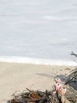 白浜海岸の白砂
