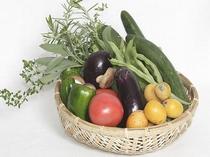 地場野菜とハーブイメージ2