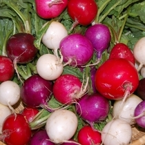 夕食・紫やピンクのカラフルなラディッシュはもちろん伊東産