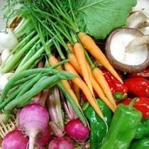 夕食・全て伊東産の色とりどりの採れたて地元野菜