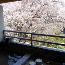 207号室専用露天風呂・花見露天風呂となる桜の専用露天風呂・たった1部屋の贅沢・・