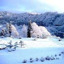 [冬]庭園