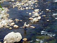 穴沢河川公園 渓流つり