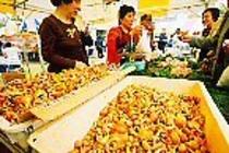 収穫祭 きのこ販売