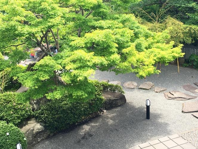 お部屋から見える紅葉の木