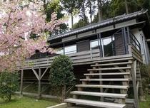 別邸COCOROから見える河津桜