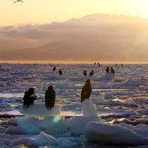 【流氷日の出】早起きをして日の出を見てみては♪?流氷に反射した光が輝き朝から幸せな気持ちに。