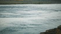 那珂川訪れた水鳥を眺めながら