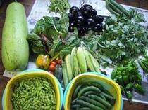 採れたての夏野菜