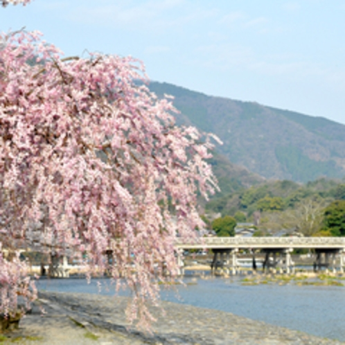 *春の嵐山は桜が咲き乱れます。風情ある街並みと桜のコラボレーションがとても美しいですよ。