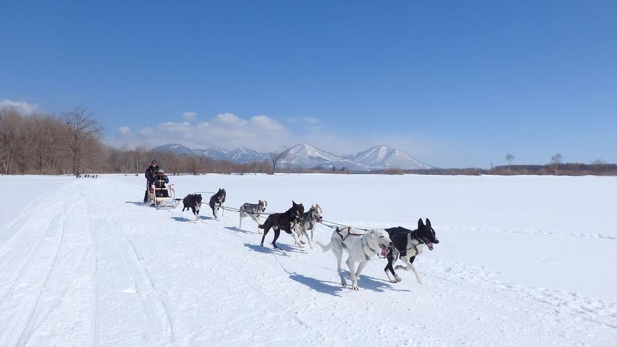 【ウィンターシーズン】犬ぞりツアー