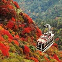 【周辺/秋】国の天然記念物にも指定される美しい紅葉