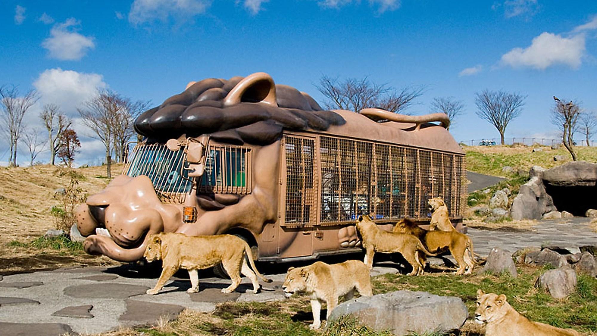 【レジャー】アフリカンサファリジャングルバスで野生動物の近くまで♪
