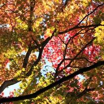 秋色の染まる紅葉時期の伊香保