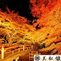 ★秋の風物詩★河鹿橋のライトアップ 今年も懸命に生き抜いた草木達の晴れ舞台です。