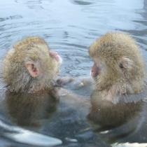 ◇おサル入浴中2