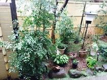 庭の木々を眺めながら癒しのひと時を♪