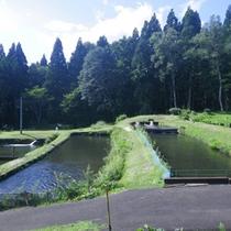 *【部屋からの眺め】黒姫高原の四季の移ろいをお楽しみいただけます。