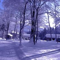 *【周辺】幻想的な樹林の雪景色。