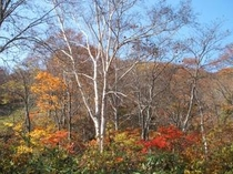 妙高の秋~紅葉~